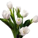 White-Tulip-4