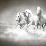 Konie (3)