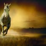 Konie (5)