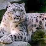 Koty (16)
