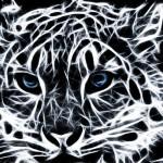 Koty (6)