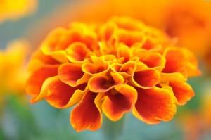 Kwiaty (11)