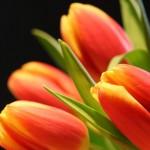 Kwiaty (12)