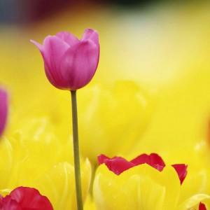 Kwiaty (2)