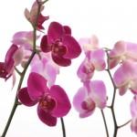 Kwiaty (37)