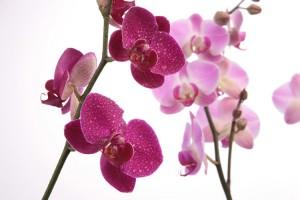 Kwiaty (38)