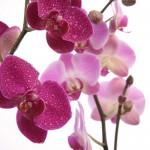 Kwiaty (39)