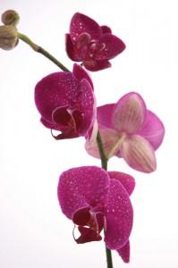 Kwiaty (40)