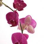 Kwiaty (41)