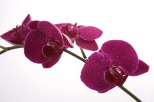Kwiaty (42)