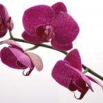 Kwiaty (43)