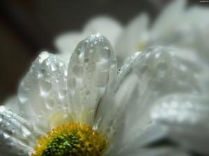 Kwiaty (47)