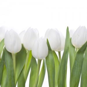 Kwiaty (5)