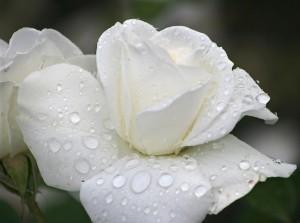 Kwiaty (55)