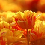 Kwiaty (57)