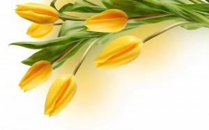 Kwiaty (59)