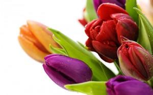 Kwiaty (60)