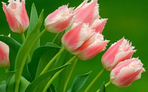 Kwiaty (61)