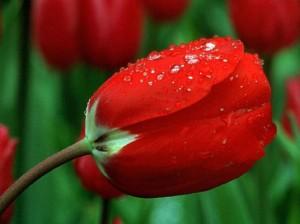 Kwiaty (63)