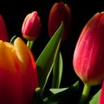 Kwiaty (64)