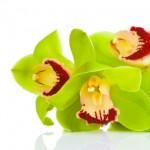 Kwiaty (65)