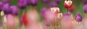 Kwiaty (68)