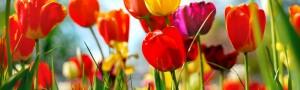 Kwiaty (69)