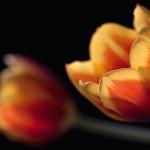 Kwiaty (7)