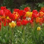Kwiaty (70)