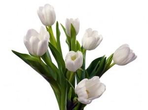 Kwiaty (71)
