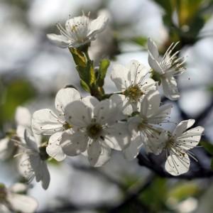 Kwiaty (72)