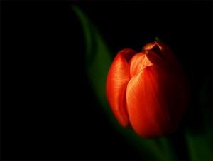 Kwiaty (8)