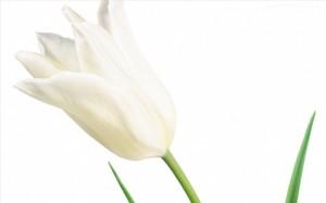 Kwiaty (9)